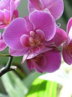 My Favorite Orchid Photo by Jyl22075