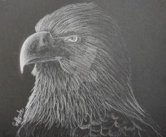 Eagle - White Pencil by Gryffycake