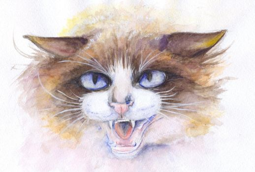 angry cat by Sdoba