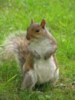Squirrel by ppgNeo