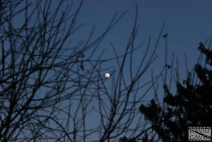 The Moon And The Tree by SadoNekoGAVEN