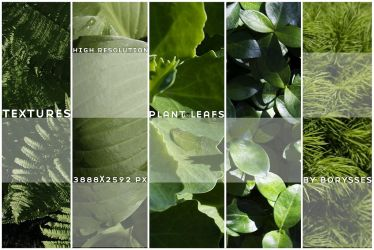 High res plants textures by borysses
