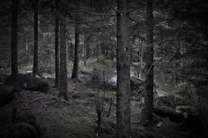 Dark Forest by Angband