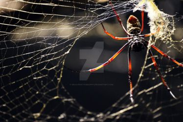 Itsy bitsy spider by Mias-Photography