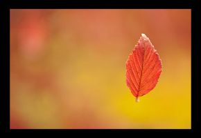 Fall by Shmithers