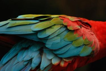 Feather Fade by madexposures