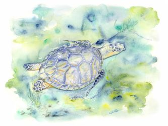 Tortue by WulfilaDellaLuna