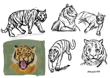 Tiger doodles (D36) by maugryph