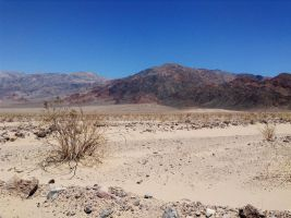 Death Valley's Life by AthenaIce