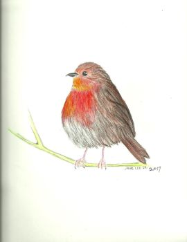 Robin red breast (colored pencils) by gandalf0987