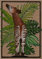 Sexy back (ACEO) by Woodswallow