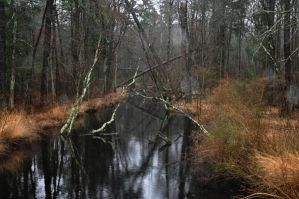 Swampy Waters 3 by FairieGoodMother