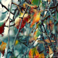 drip drop by illusionality