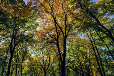 Colours of Autumn II by SeptimusStuff