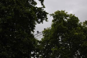 London Eye between the trees by Curri-chan