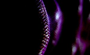Violet Enigma by Stevieberg
