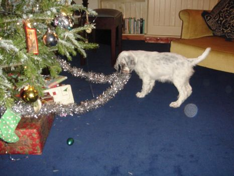 The dog and the Xmas tree... by Chiara-Wolf