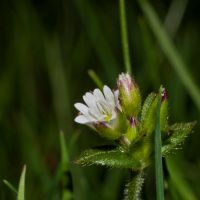the tiniest of flowers by Zyklotrop