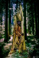 Rotted Broken Trunk by LeWelsch