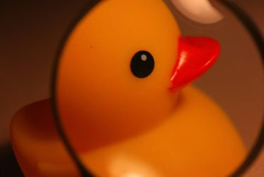 Duck under a magnifying glass by WellGG
