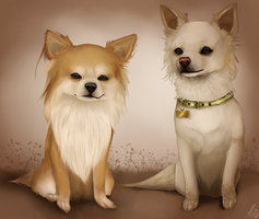 Chihuahuas - Comission. by SpasmofantenReturns