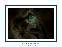 Chat... by elcarretero