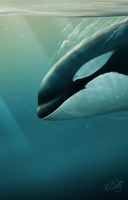 Diving Orca - 2017 full art by SyKoticOrKa