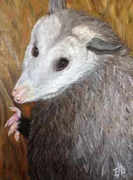 Petunia the Virgina Opossum by WolfsEclipse