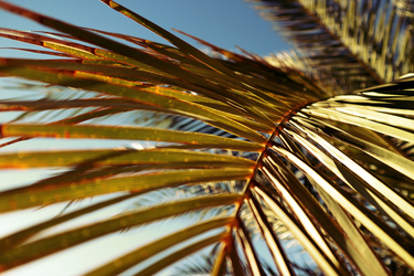 Palms in Portugal [wallpaper] by fkyhdino