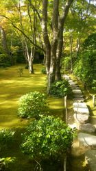 stepping stones along a sea of green by jadethestone