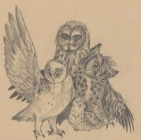 Collective Owls by Lemguin