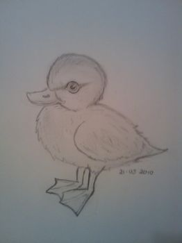 The Duckling by Mogzay