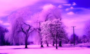 Infrared Riverside Park in St Neots Cambridge by photographybypixie