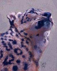 Snow Leopard Experiment by TamberElla
