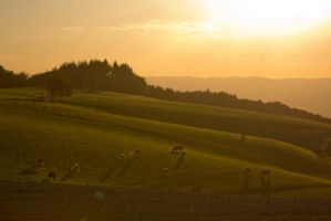 Long shadow cows by mprangenberg
