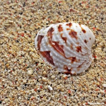 She sells sea shells by the seashore by stayoutoftrouble