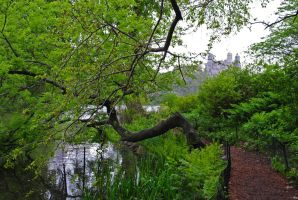Central Park 06 by LucieG-Stock