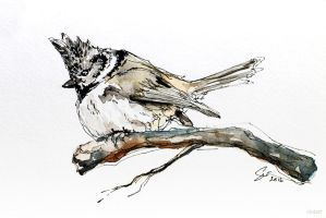 Crested Tit Sketch by siniart