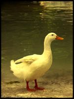:Ducks pt. I: - Pride by demisone