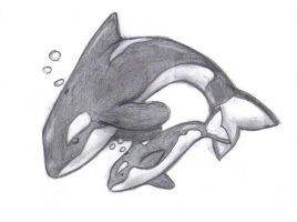 Orcas by Smallfry123