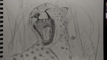 Cheetah practice - one more day by kosko99