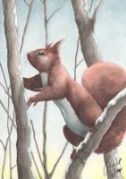 Winter Squirrel by Toradh