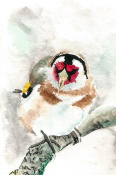 Goldfinch by nornas