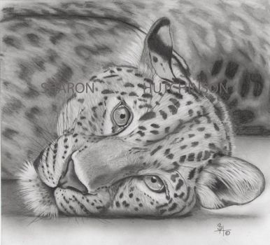 The Leopard by Shazhutch
