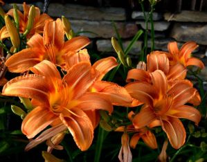 Wild Lilies by recycledrelatives