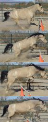 Pony Jumping Sequence by daggerstale