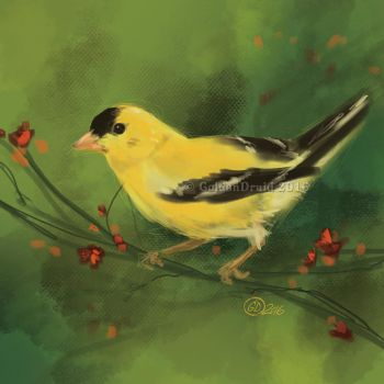 Goldfinch - SP by GoldenDruid