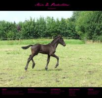 Horse Stock 006 - Friesian by MiszD