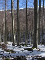 Snowy forest 07 by NdrN