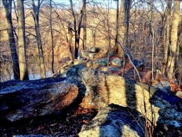 Outcrop by marshwood